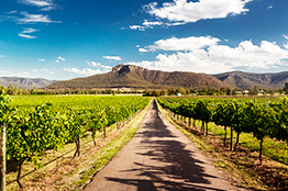 Hunter Valley vinmark i Newcastle